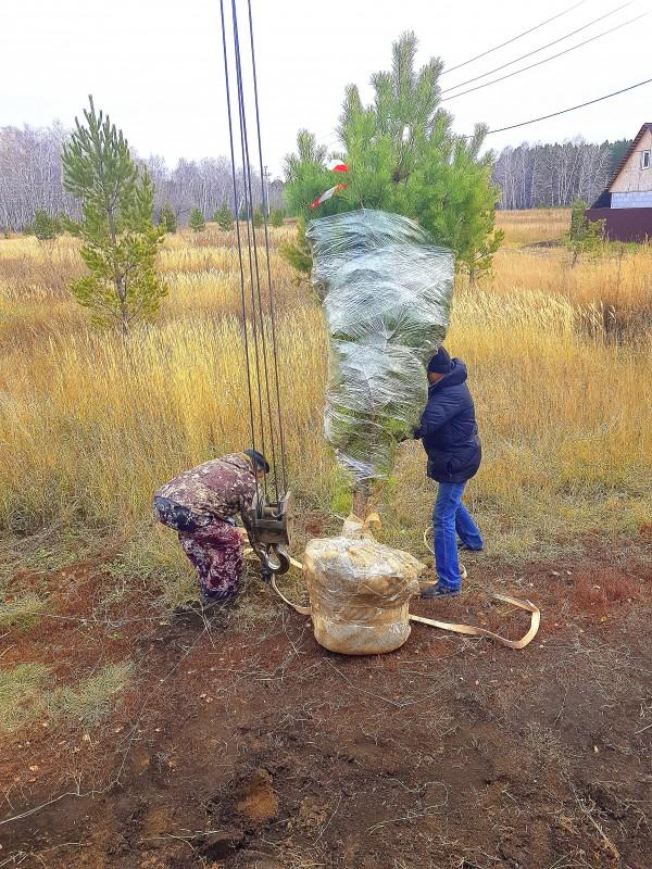 упаковка дерева