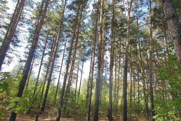 омский земельные участки